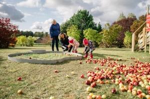 Jau astoto gadu Latvijas sulīgākais festivāls Dobelē pulcē novada un apkārtnes mājražotājus, stādaudzētājus, augļkopjus un interesentus 19