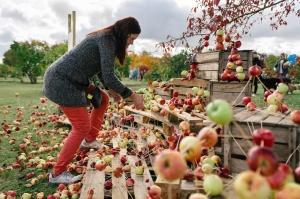 Jau astoto gadu Latvijas sulīgākais festivāls Dobelē pulcē novada un apkārtnes mājražotājus, stādaudzētājus, augļkopjus un interesentus 27